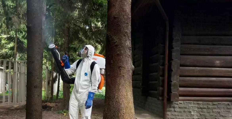 Уничтожение жуков в Воронеже
